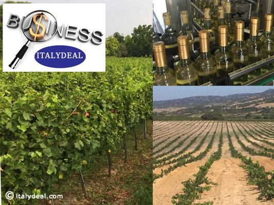 come vendere agli stranieri vino italiano